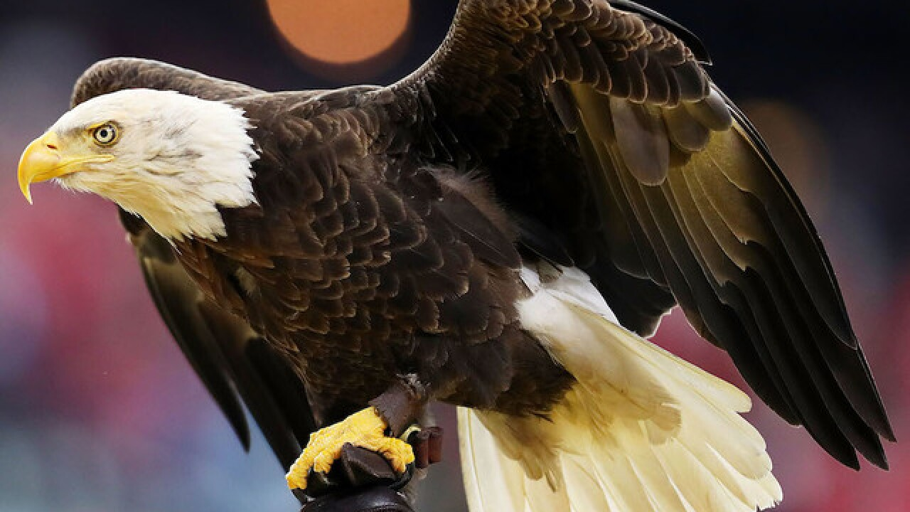 Man admits to killing bald eagle by shooting, running over it with 4-wheeler