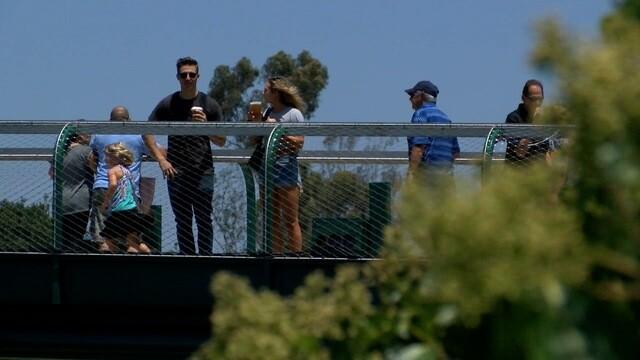 The San Diego Zoo opens new pedestrian superstructure Mesa Bridge