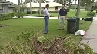 WPTV yard trimmings.jpg