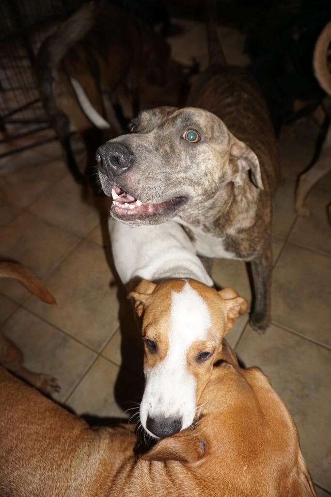 Bahamas dogs 3