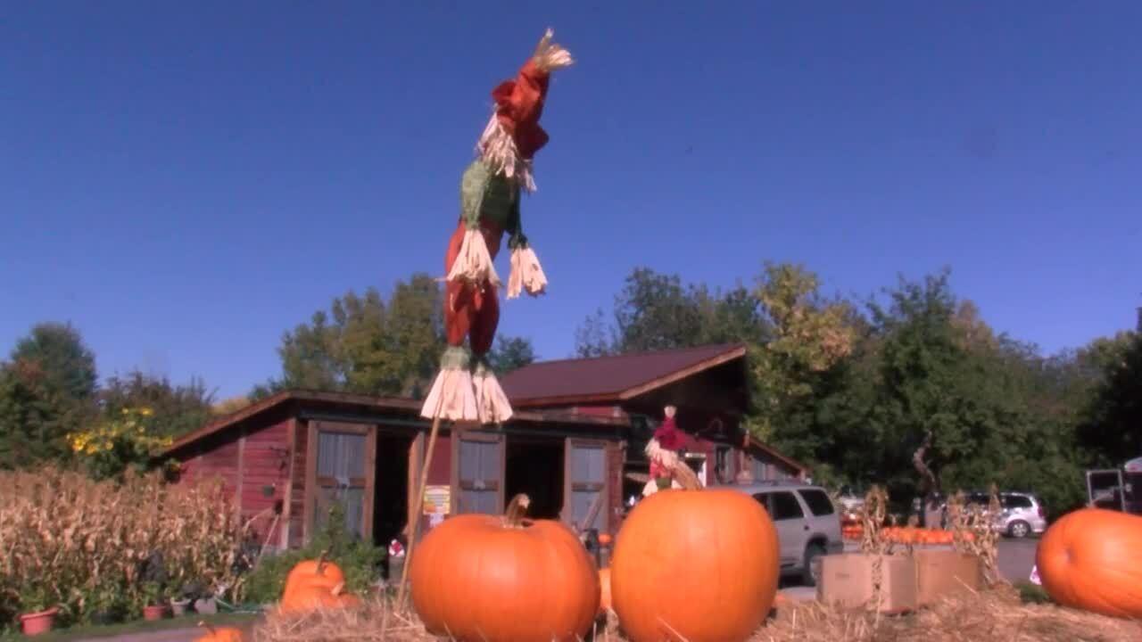 Missoula Pumpkins 2.jpg