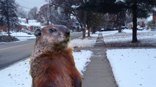 Winter making a comeback as Groundhog Day approaches