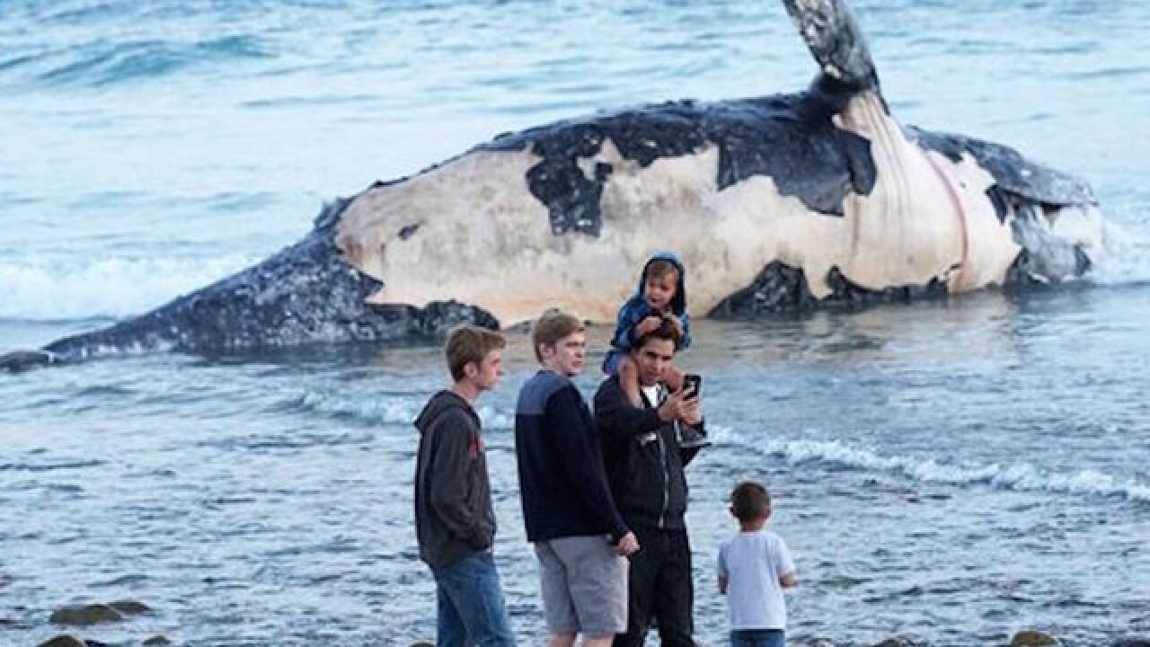 Dead whale stinks up California surf spot