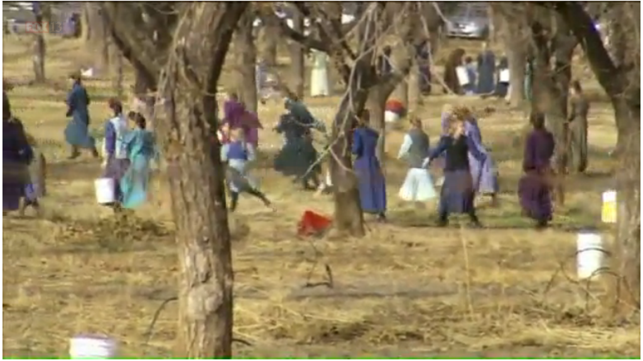 Company claims FLDS children used in harvest weren't employees