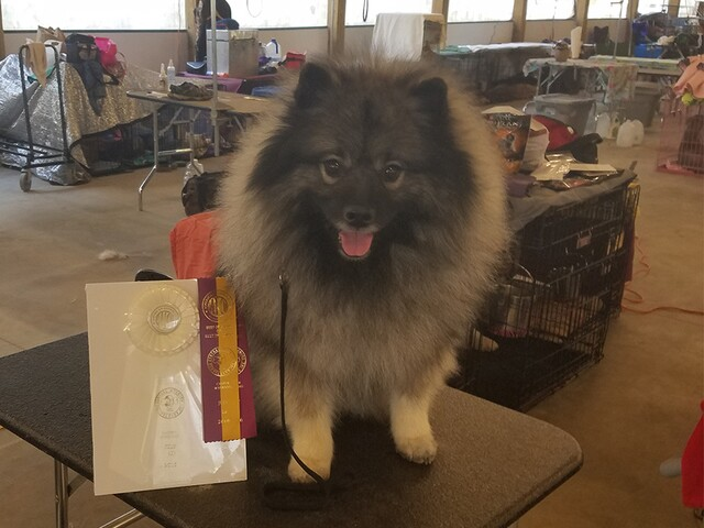 Photos: Colorado dogs competing at the 2017 Westminster Kennel Club Dog Show
