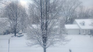 Snow covered trees in Cuyahoga County.
