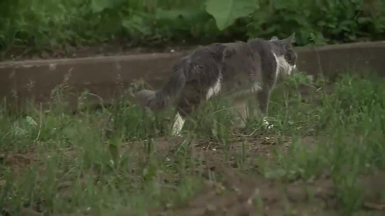 Cat caught on van roof is safe
