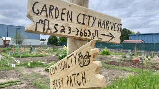 Garden City Harvest offers guidance on planting a COVID-19 victory garden