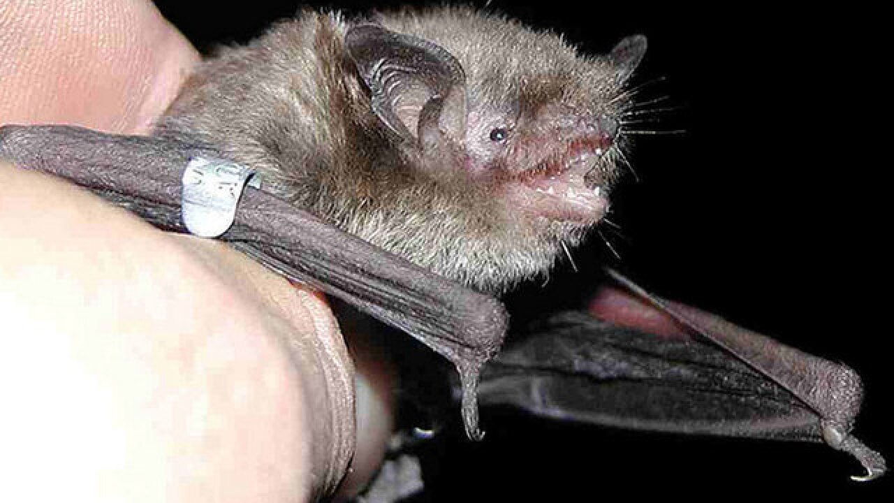 Bat tests positive for rabies in suburban Boca Raton