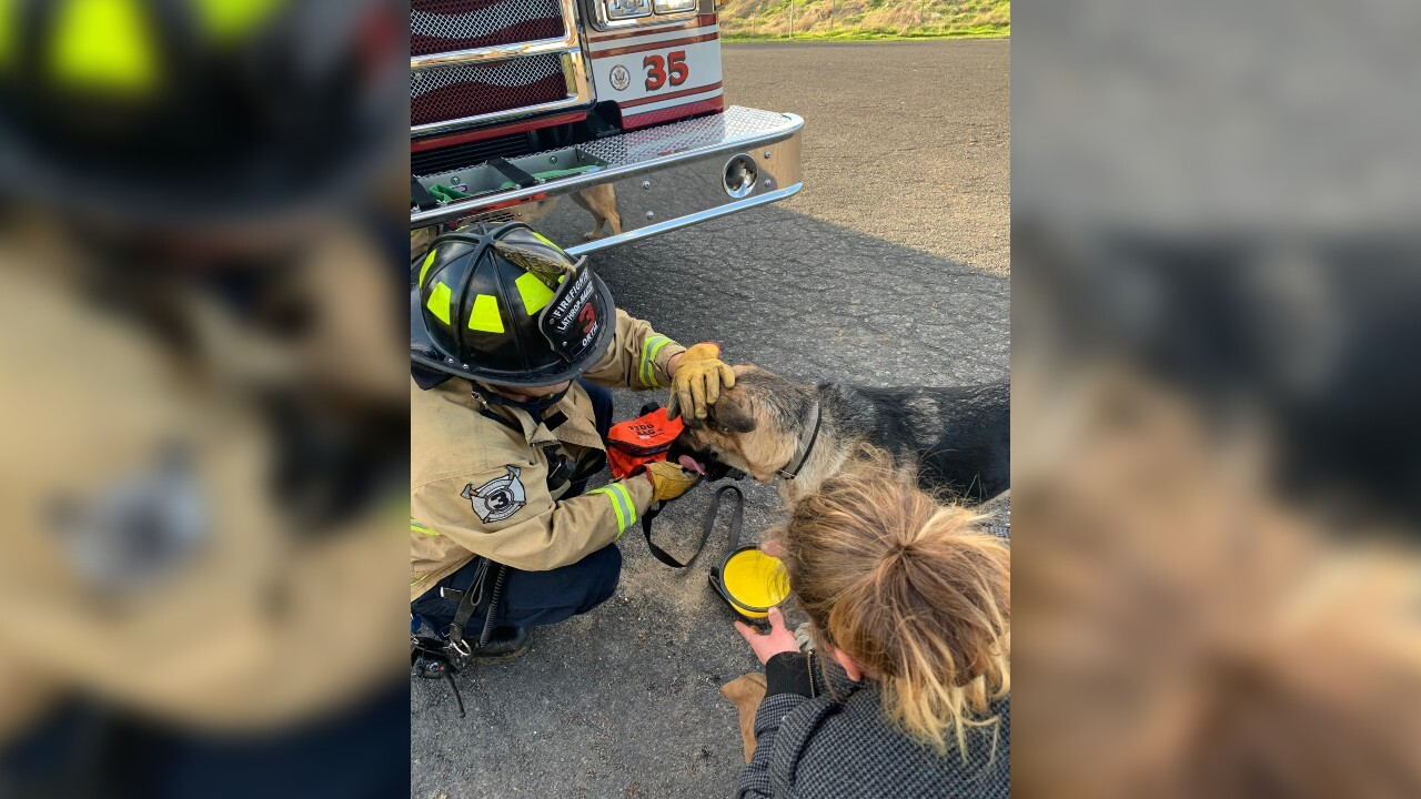 Firefighters rescue dog that chased cat up tree, got stuck
