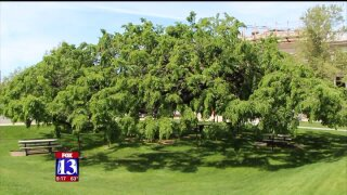 Uniquely Utah: One-of-a-kind hybrid in Provo has roots dating back to1927