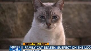 Family cat beaten, suspect still on the loose