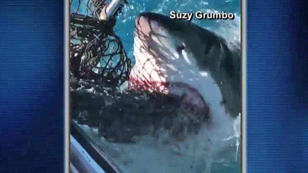 wptv-shark-encounter-.jpg