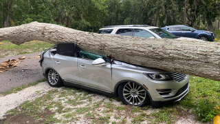 downed-tree-000.png
