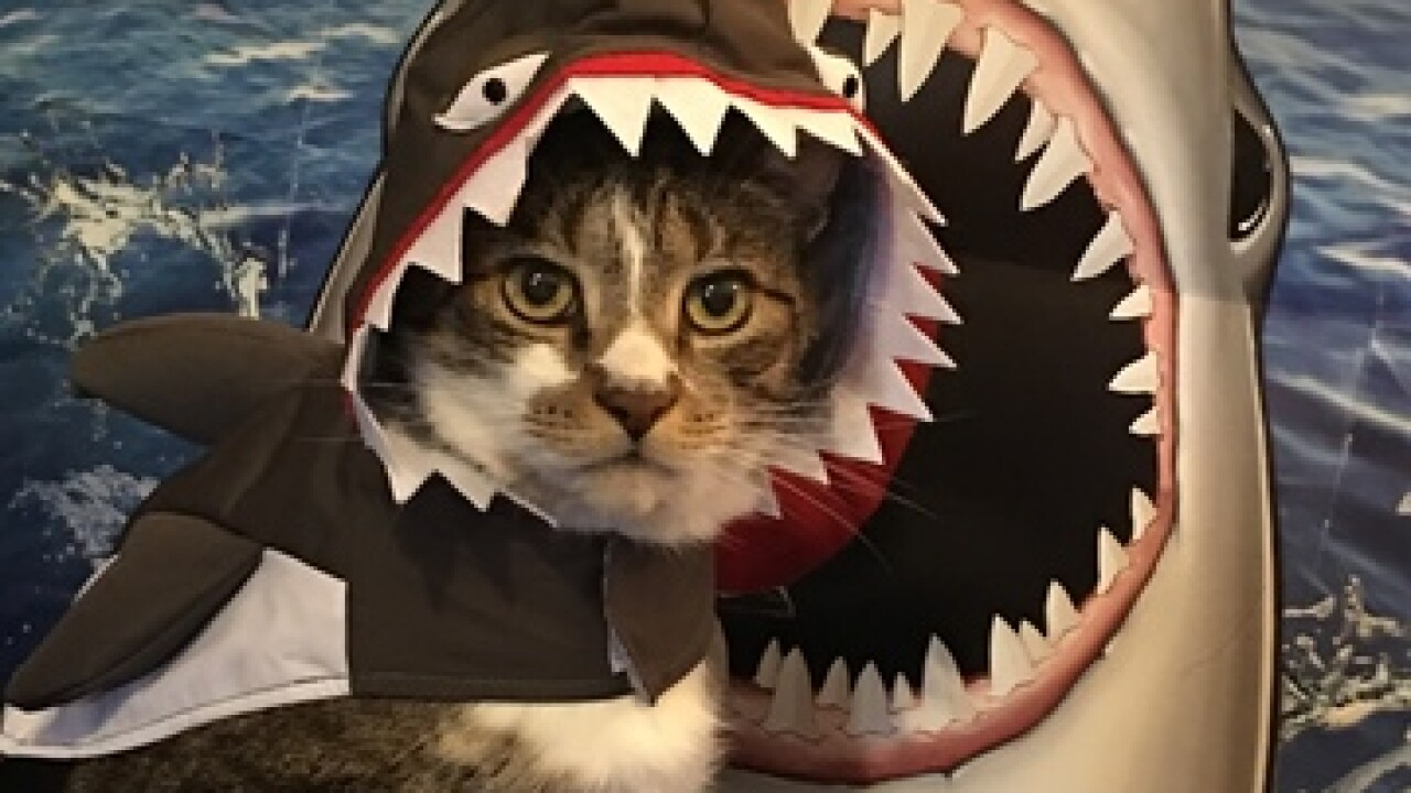 Yes! Pics: Pet Costumes