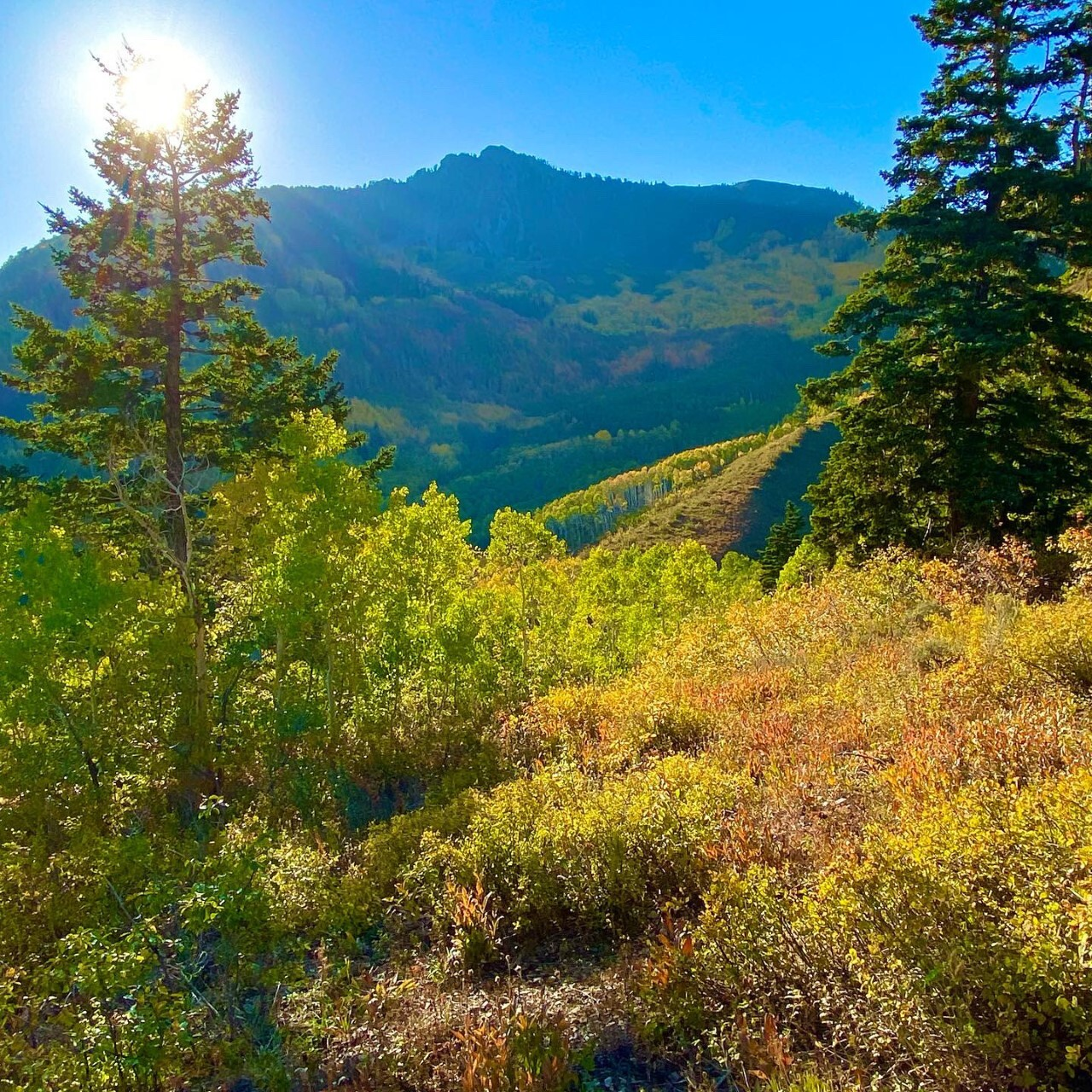 Butler Fork Trail Big Cottonwood Canyon Michael Boman 3.jpg