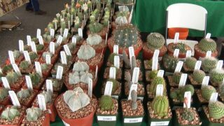 Cactus and Succulent Society holds biennial convention in SLO