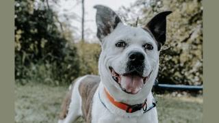 Warsaw Wayne County dog shelter