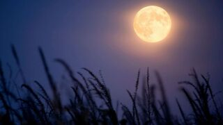 harvest-moon-1-gty-er-190910_hpMain_4x3_992.jpg
