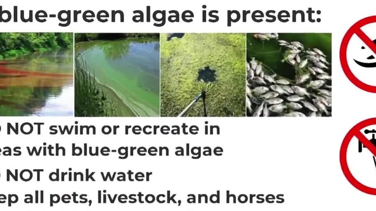 algae sign.jpg