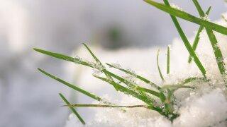 grasses-2990666_1280.jpg