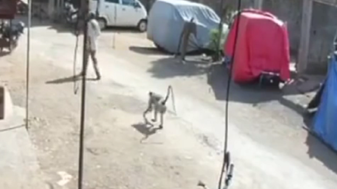WATCH: Super monkey randomly drop kicks man to ground