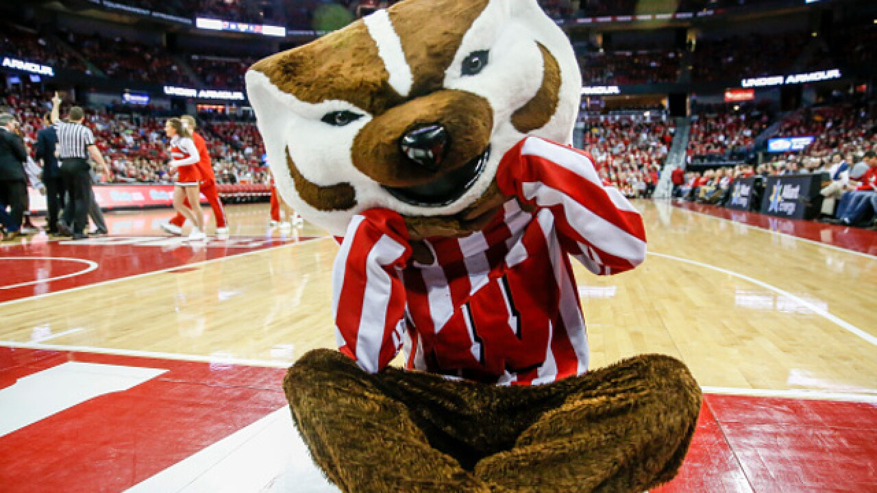 """Bucky on Parade"" brings 85 Bucky Badger statues to Dane County"