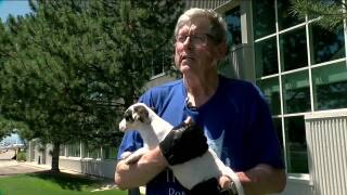 Everyday Hero: Volunteer pilot helps to rescue puppies, bring them to a brighter future