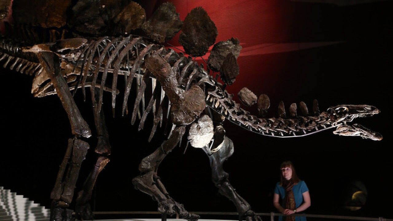 10 dinosaurs that roamed Colorado in the past