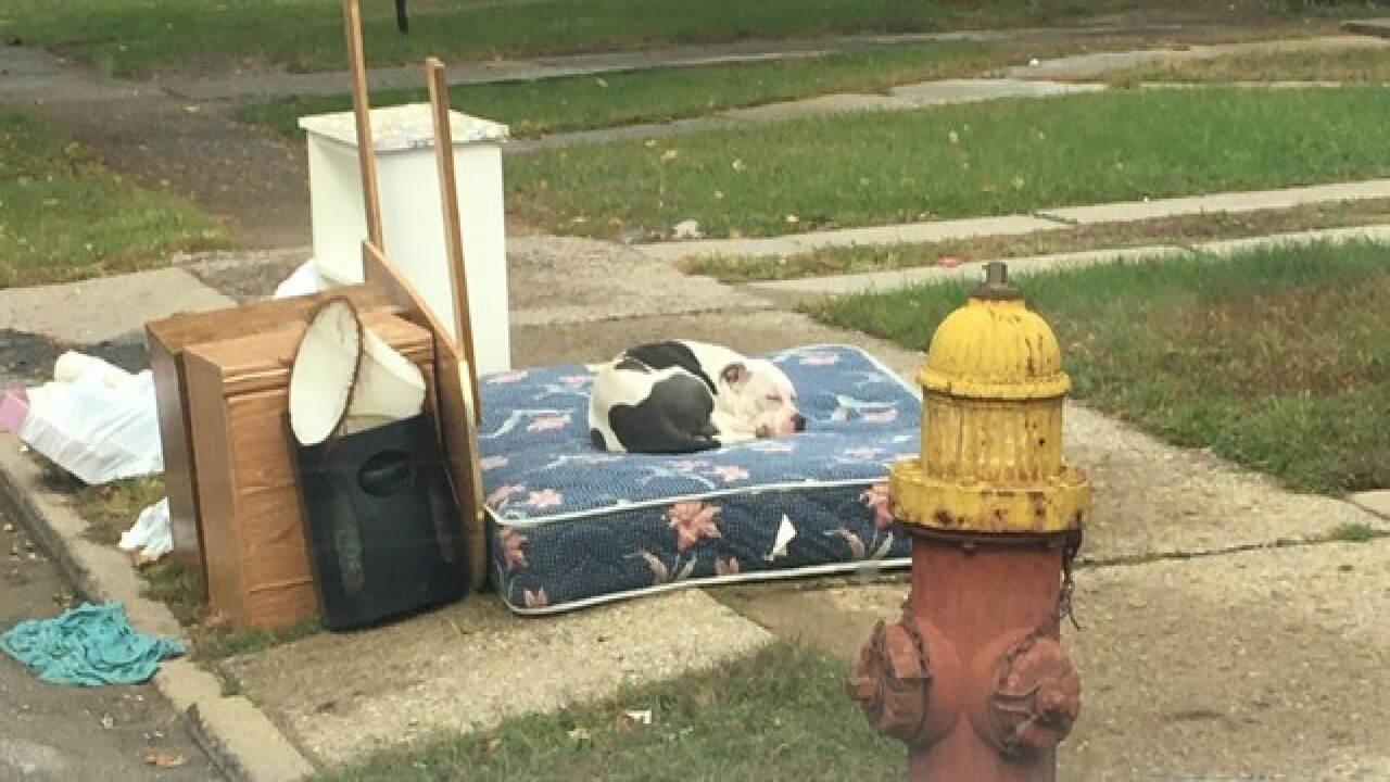 Dog left behind after family moves out, waits for owners to return for a month