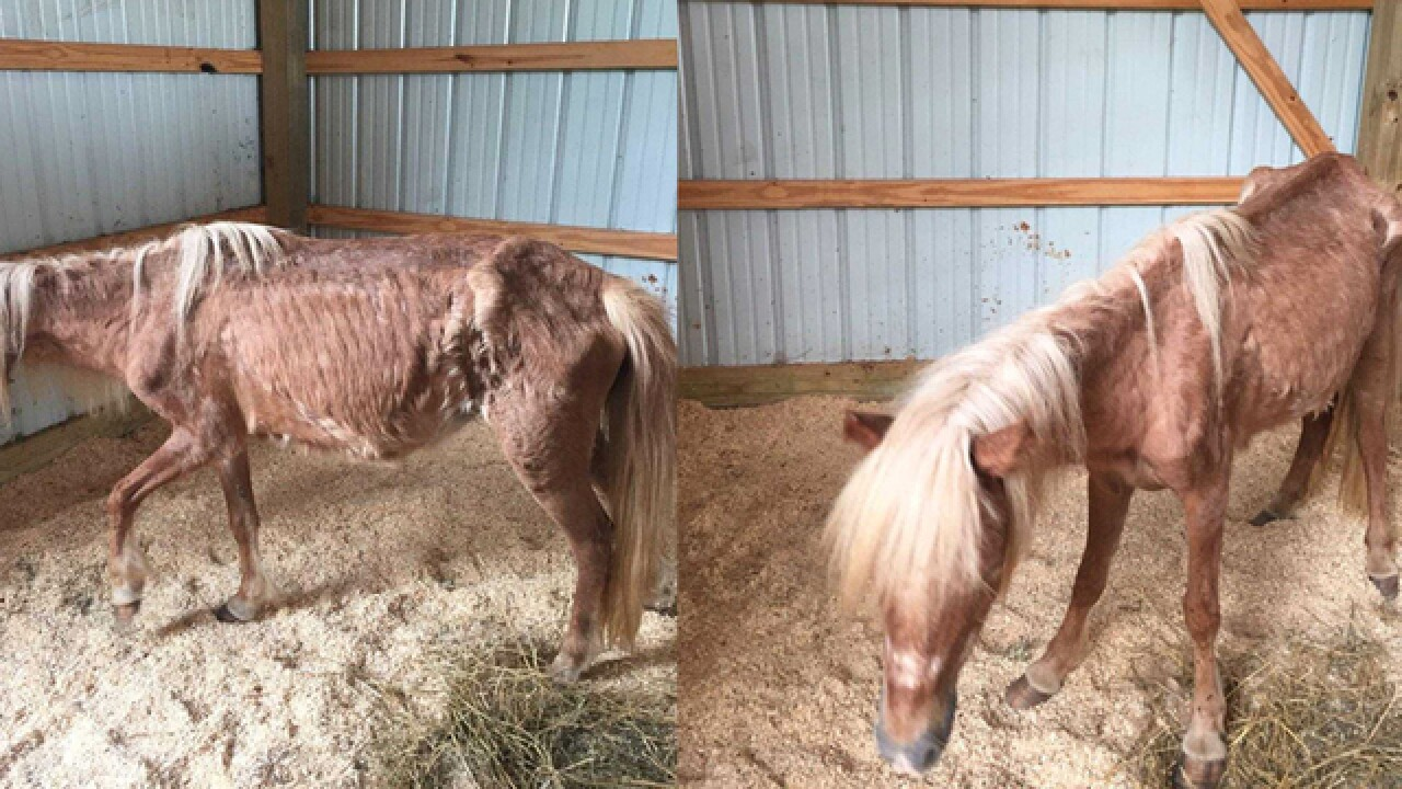 Emaciated Pony Found In Goodlettsville; Owners Sought