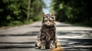 Watch the 'Pet Sematary' remake trailer