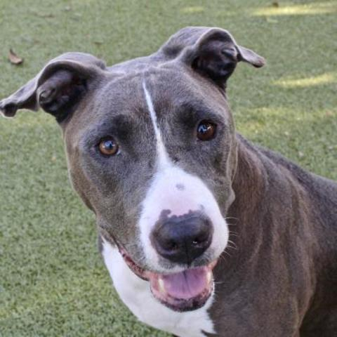 PHOTOS: 20+ adoptable pets in the Tampa Bay area for the weekend of August 17