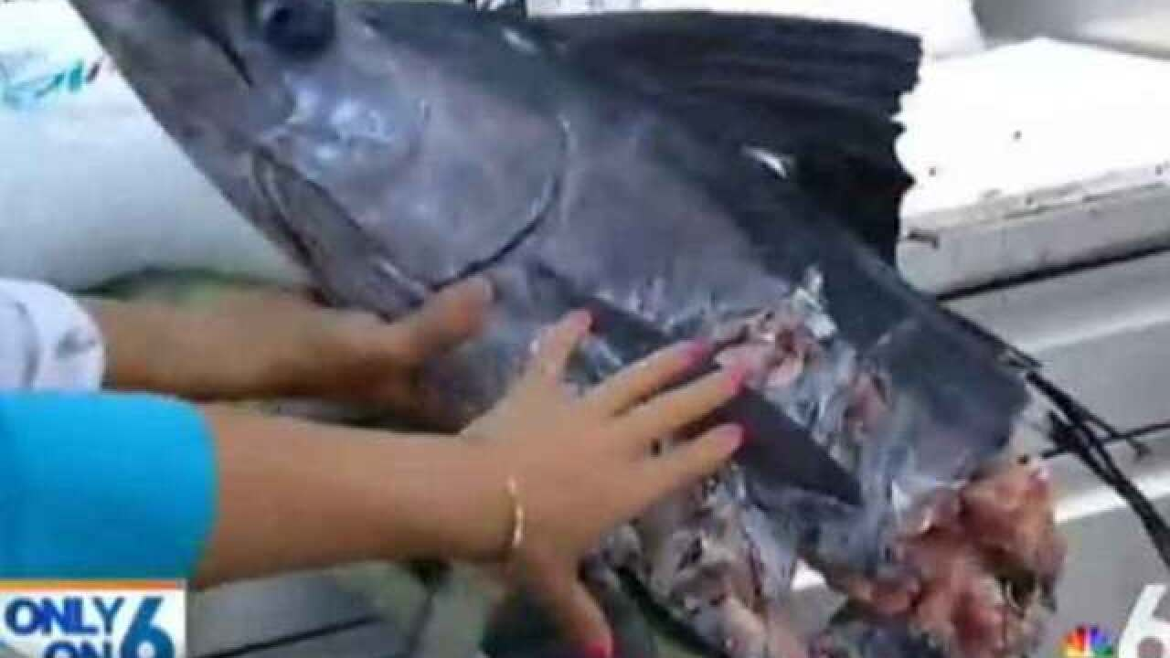 VIDEO: 500-pound shark snatches sailfish