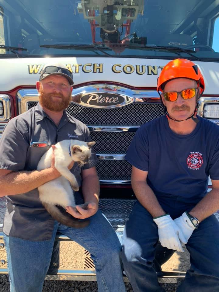 Photos: Firefighters seeking cat's owner after daring rescue in WasatchCo.