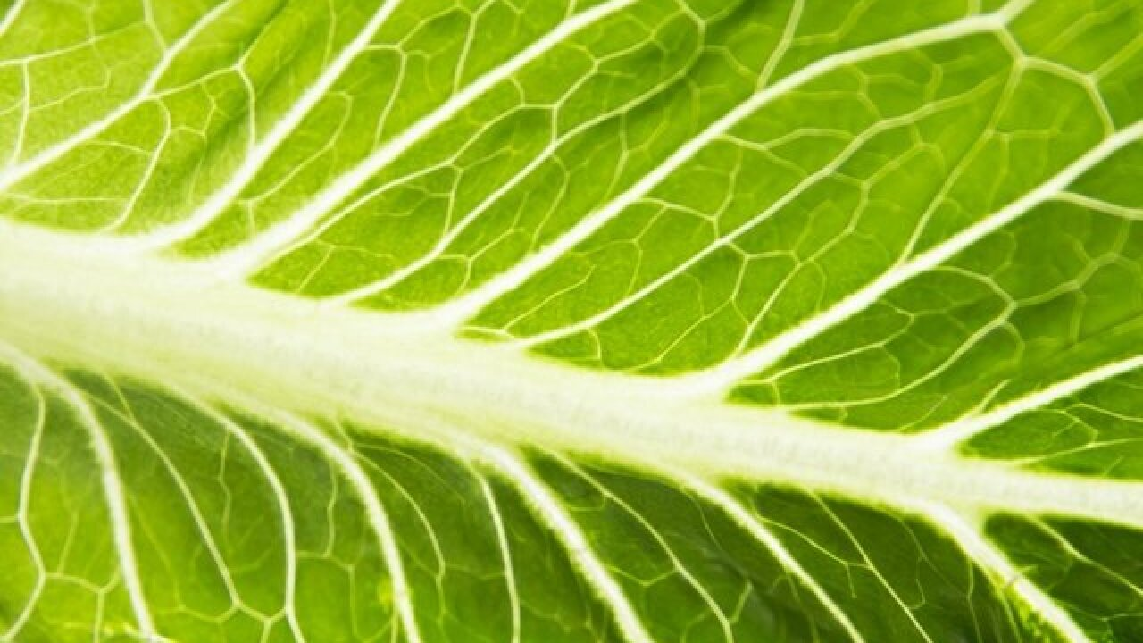 E. coli outbreak linked to romaine lettuce has killed one person