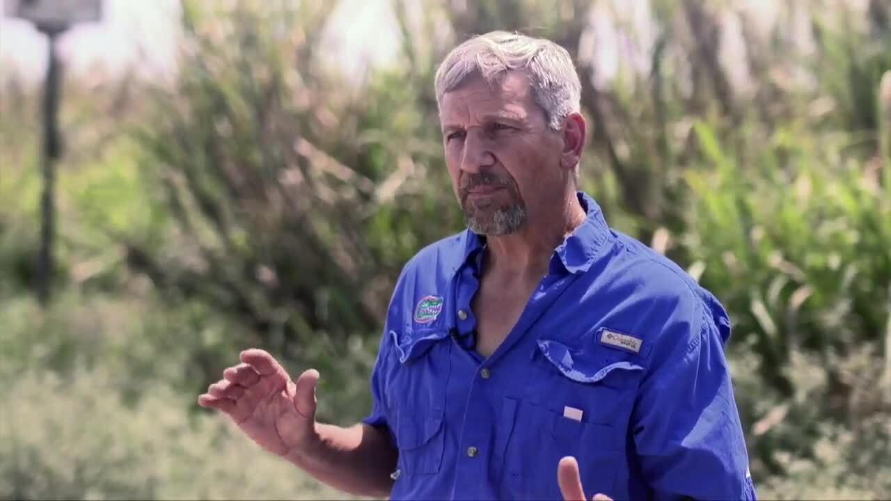 Dr. Richard Raid, researching barn owls