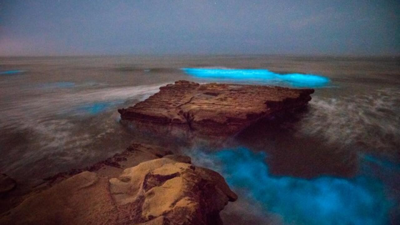 Red tide creates eerie glow on San Diego coast