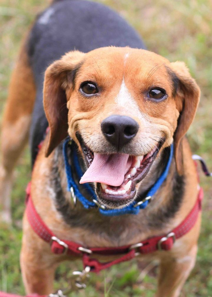 Photos: Adoptable pets looking for their newhome!