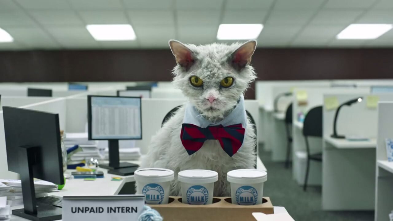 Utah office cat named 'Pompous Albert' earns internet fame, signs with LA agent