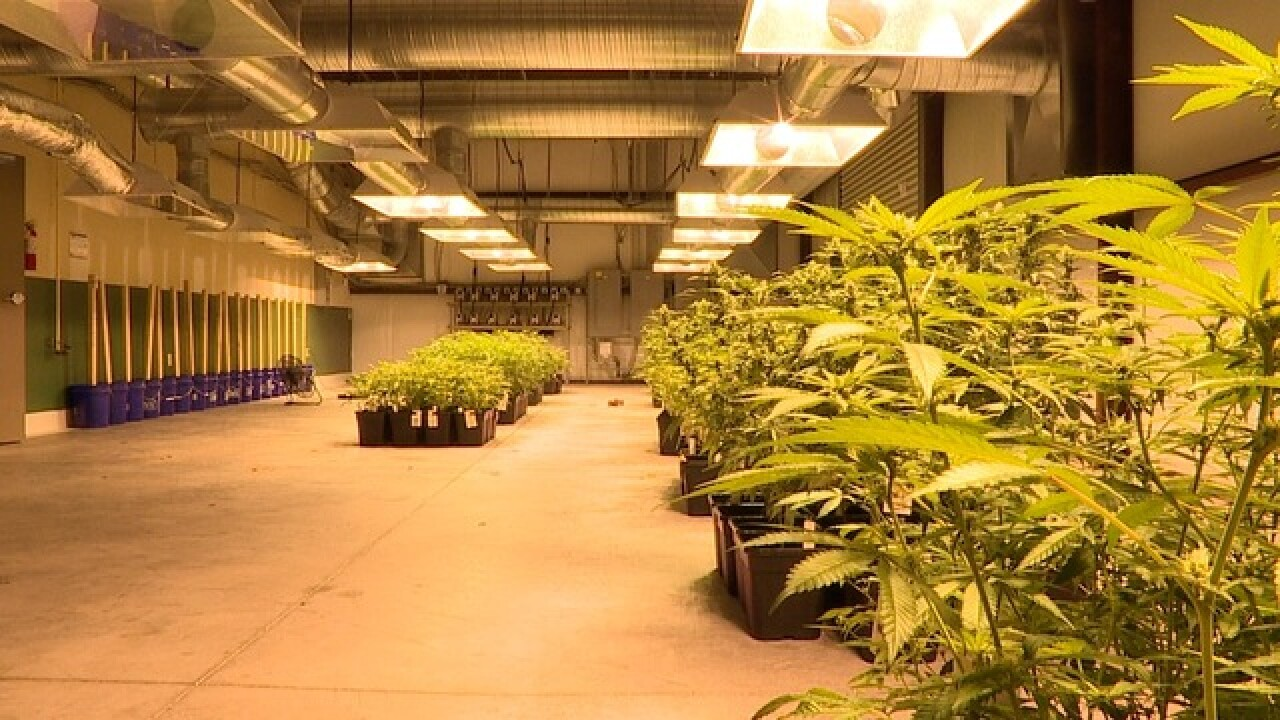 Is money motivating a marjuana monopoly in FL?