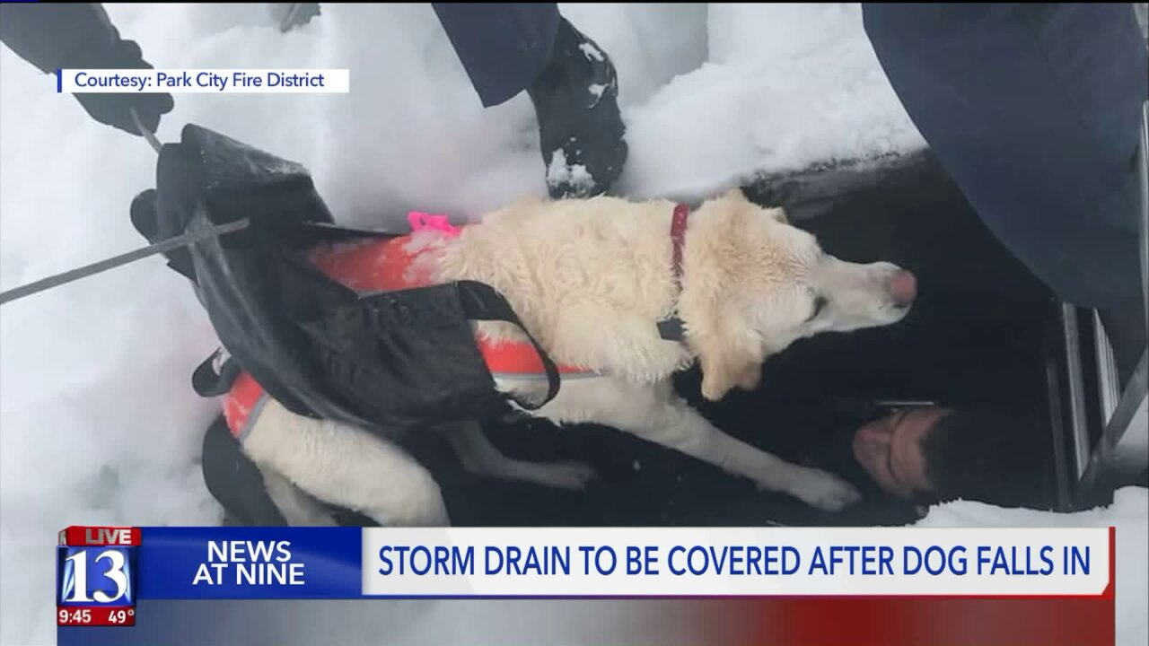 Dog rescued after falling down Park City storm drain