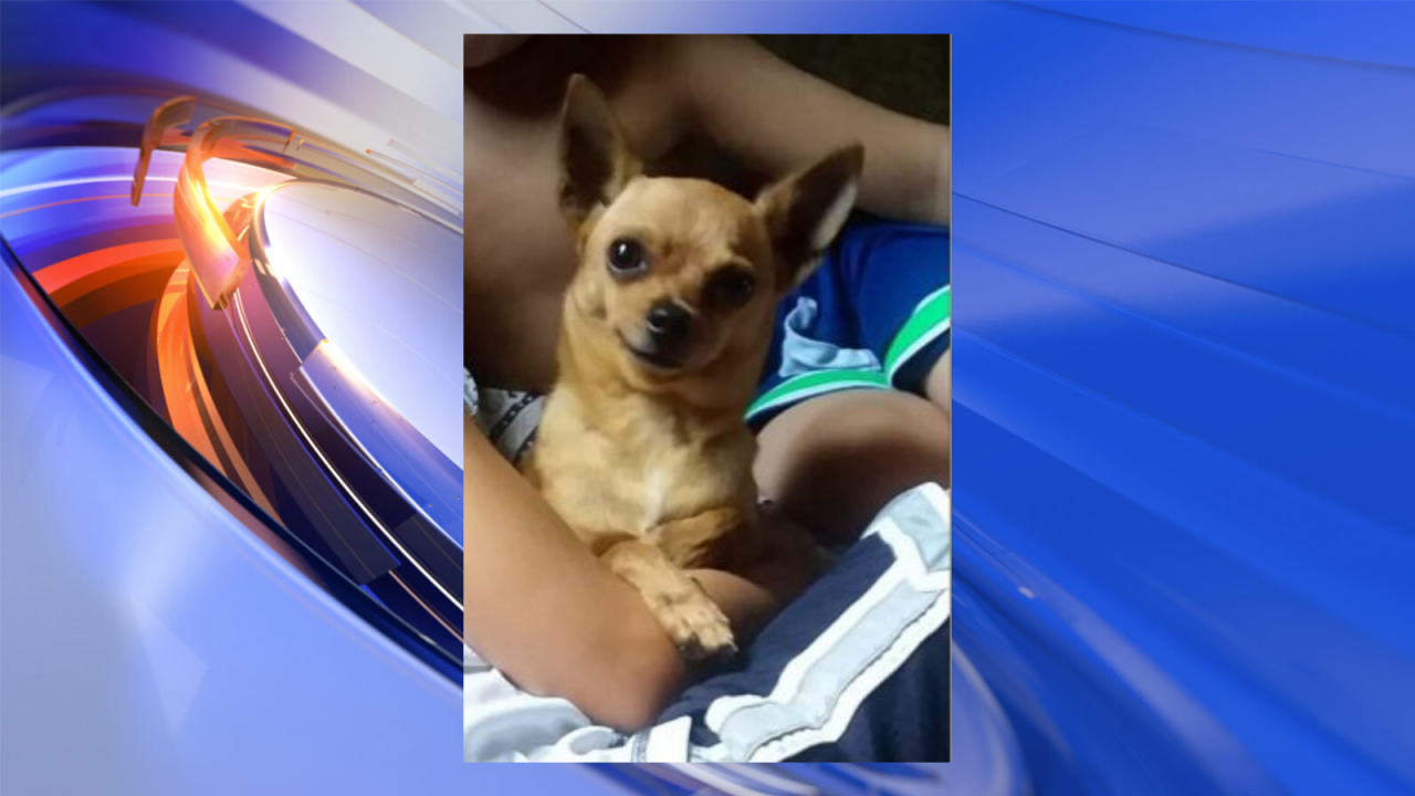 Emotional support dog missing for a week; Virginia Beach owner frantic to findher