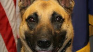 Oszkar Fortville Dog.PNG