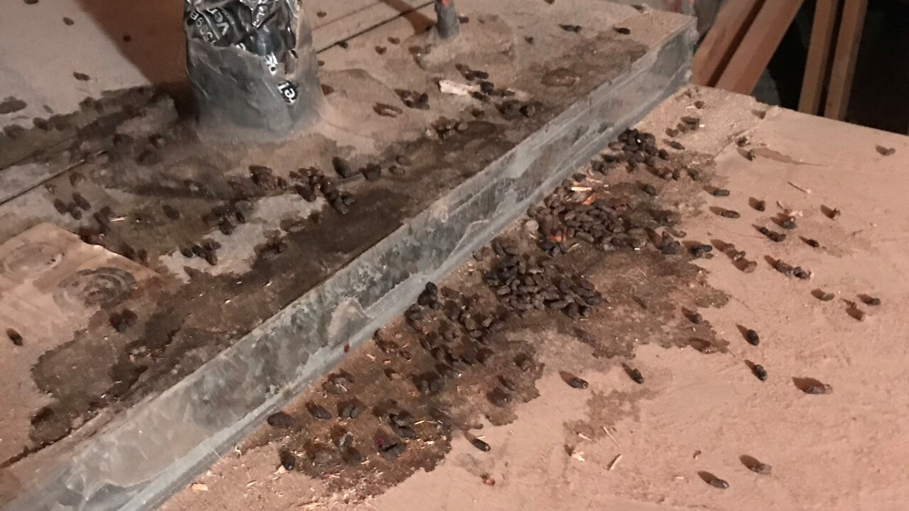 Truly Nolen pest control says there has been an 'epic' increase in calls related to pests amid the pandemic and record-setting dry weather across Southern Nevada.