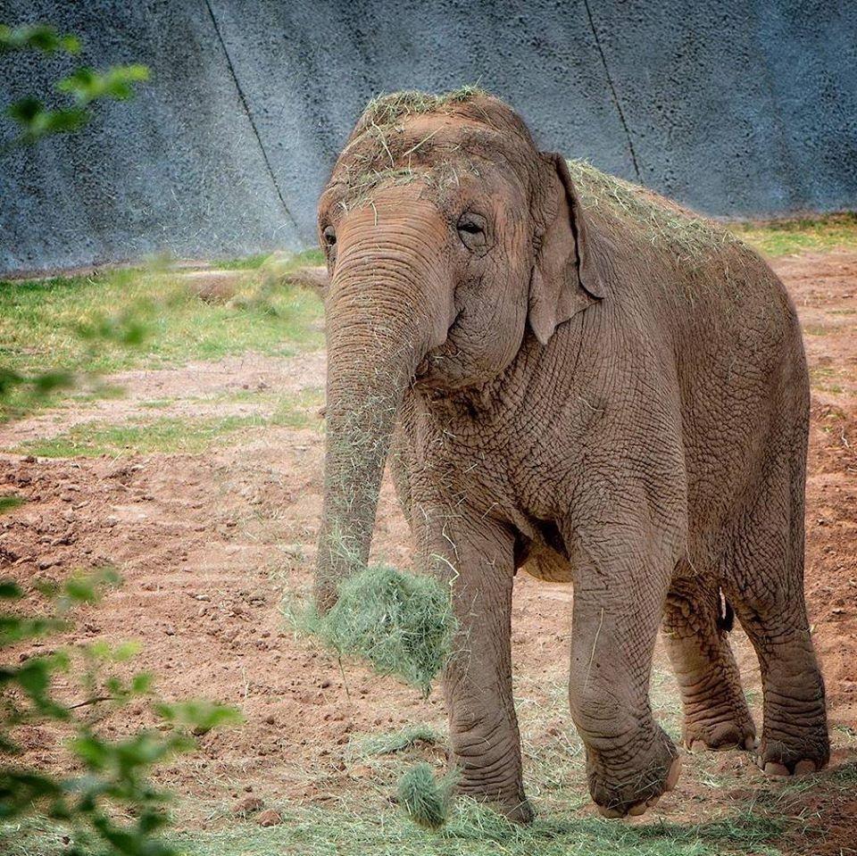 Reba Asian Elephant Phoenix Zoo - Handouts7.jpg