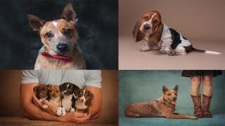 Diane Dultmeier pet portraits montage