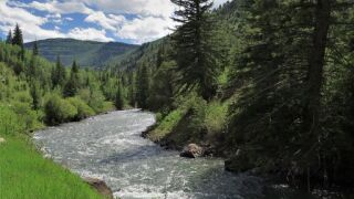 crystal river.jpeg