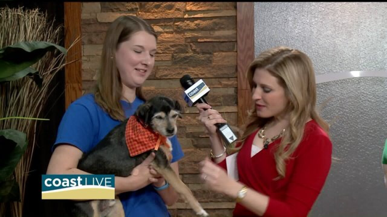 "Making ""furever friends"" for Homeless Animals Awareness Week on Coast Live"
