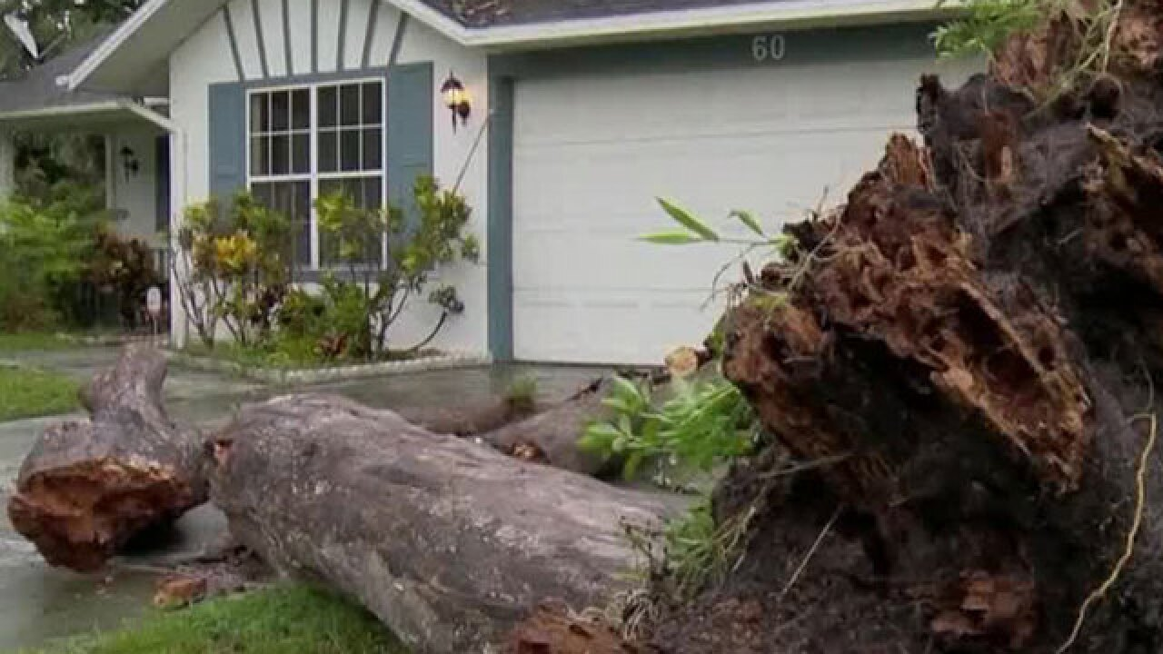 2 people struck by fallen tree in Central Florida